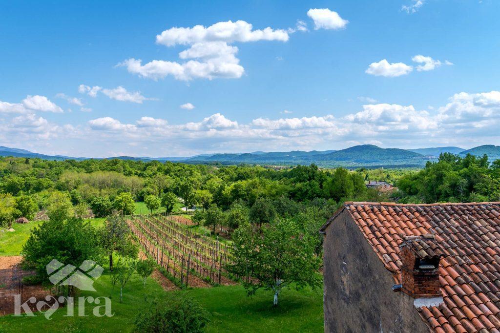 Kras okolje vinograd
